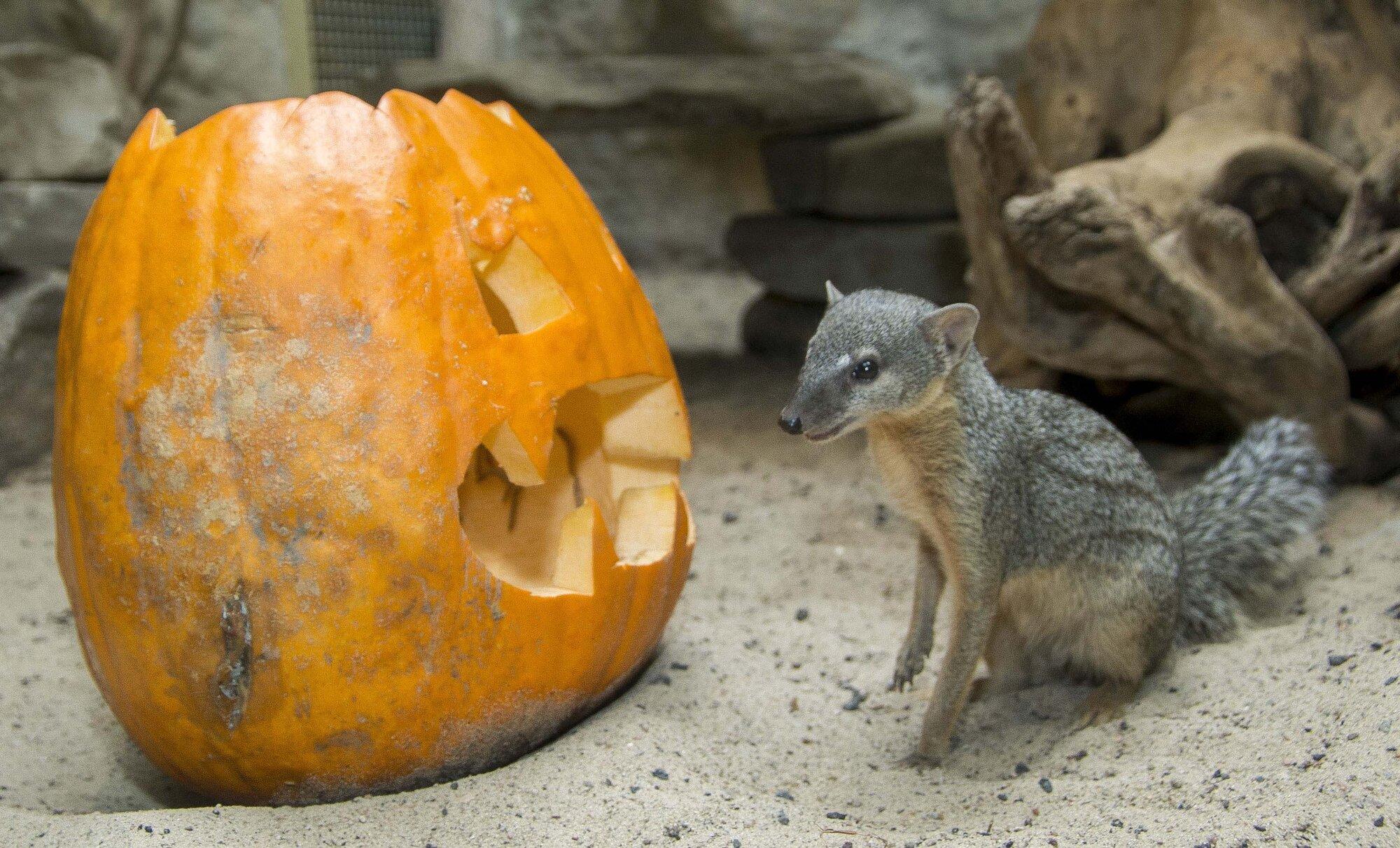 Roaring Halloween Zoo Berlin